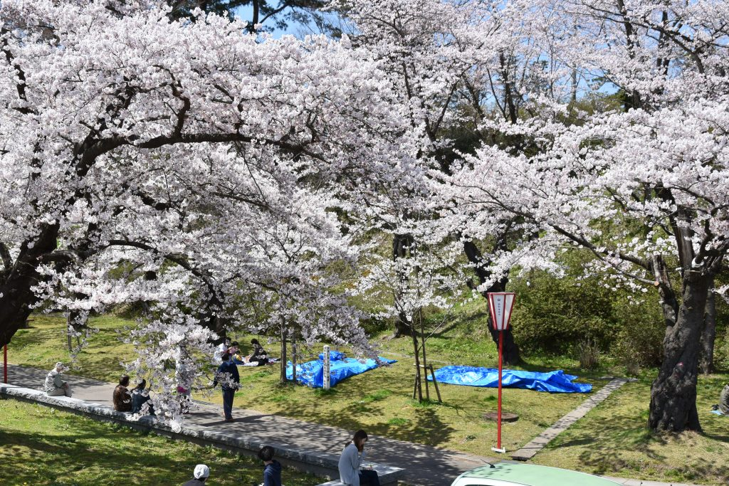 本荘公園の桜まつり01
