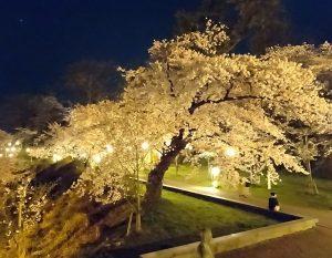 本荘公園ライトアップ
