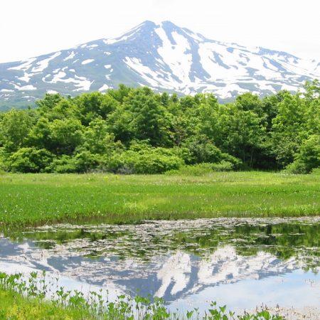 桑の木台湿原