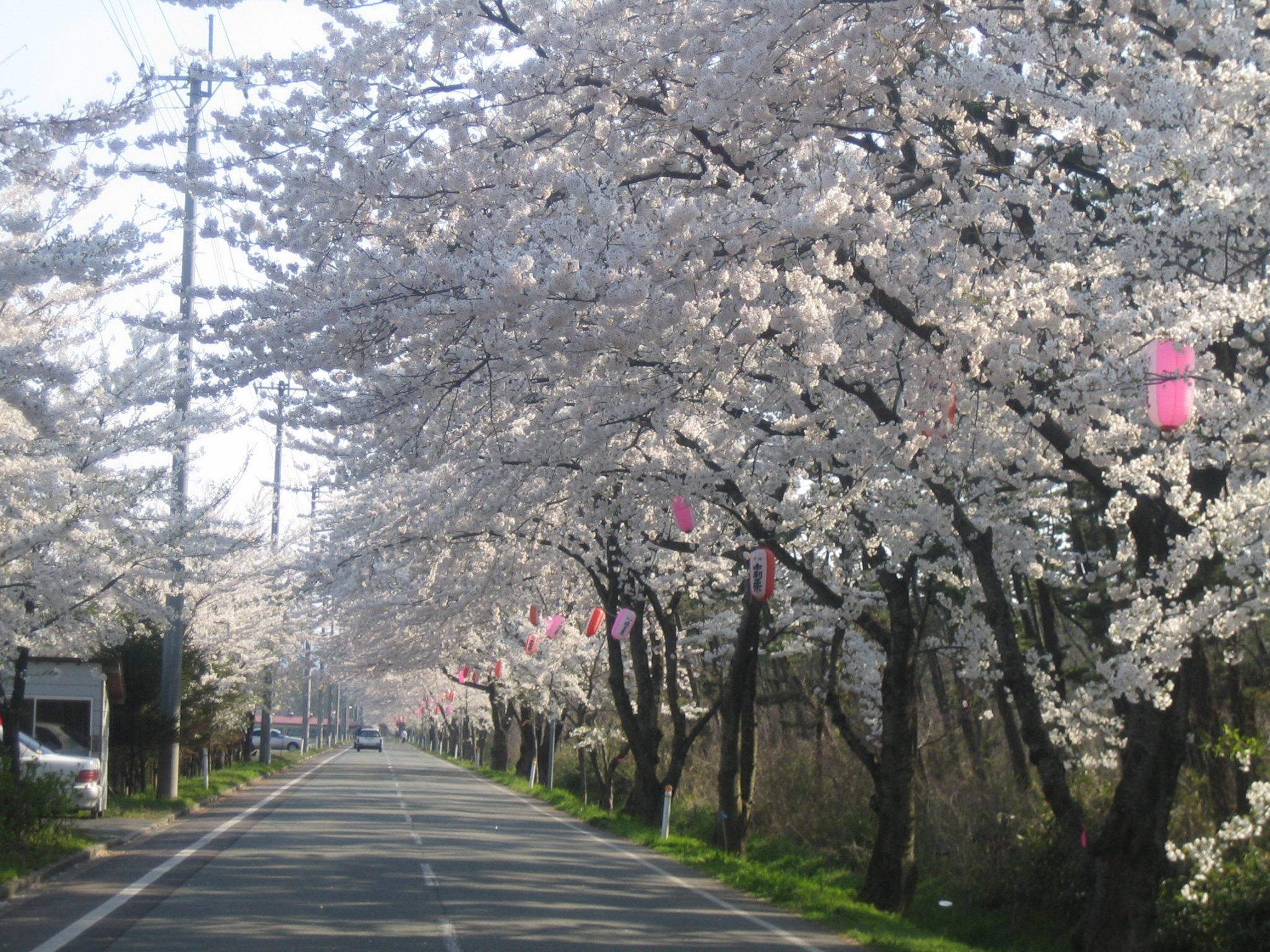 西目 桜並木