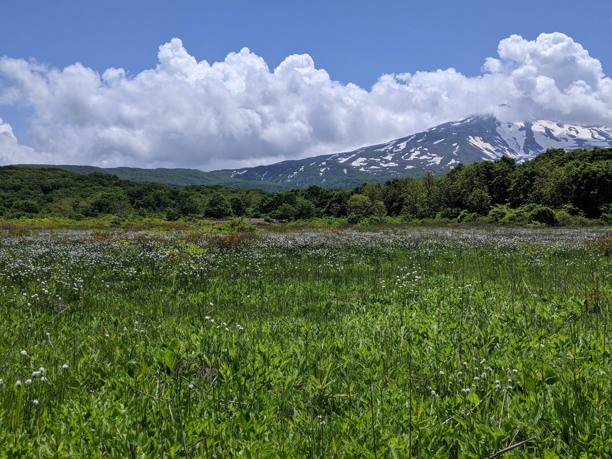 桑ノ木台湿原20210601